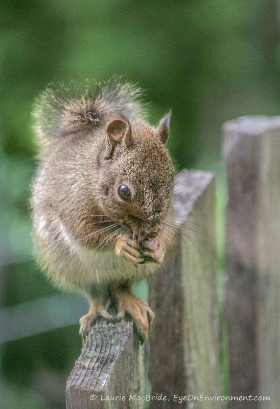 squirrel with seed, closeup