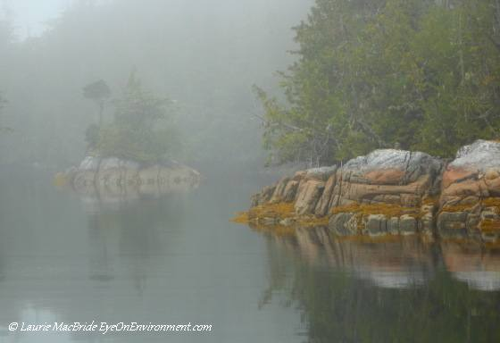 Foggy morning, Skull Cove