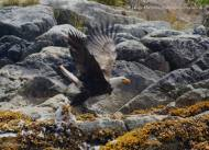 Gull on theMenu