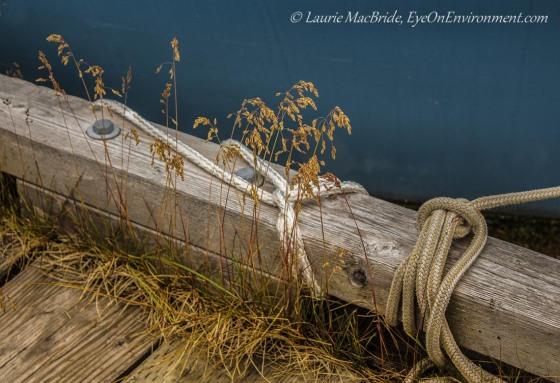 A dock with ropes tied to it and grass growing on it, and the water beyond.