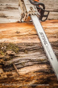 Chain saw on large log