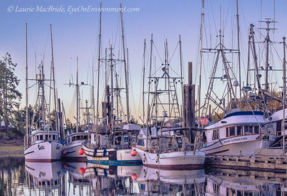 Fishboats at dock at dusk