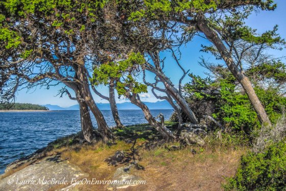 Trees on a small island, bent over by the wind