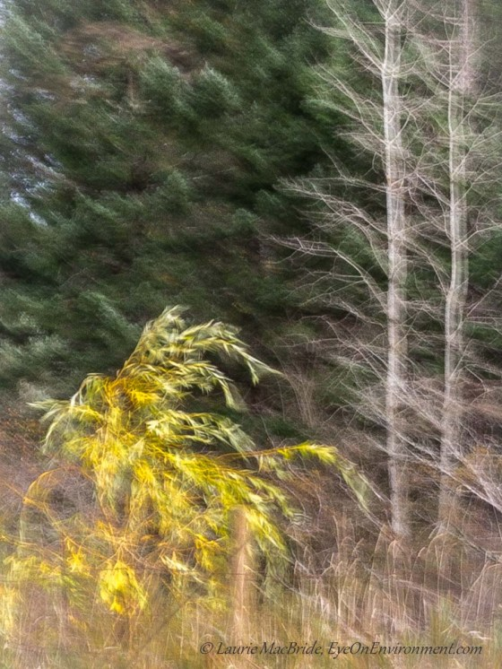 Wind blown trees