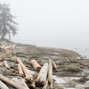 Beach with fog and drift logs.