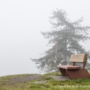 Park bench in the fog