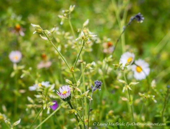 Flowering plants in a lawn