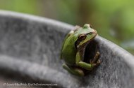Must be the Season of theFrog