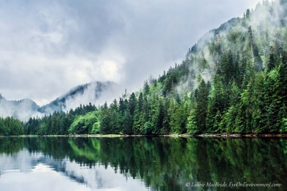Shoreline reflections and misty forest