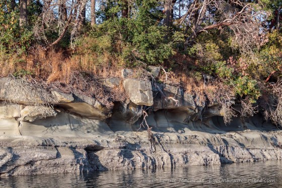 Detail of eroded shoreline with evening light