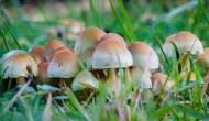 The Mushrooms Missed theMemo