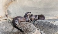 Otter Delights