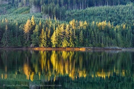 Golden light on trees along shoreline